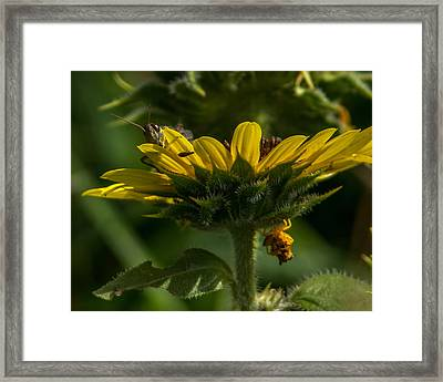 A Bugs World Framed Print by Ernie Echols
