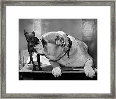 A Bulldog And A Puppy Framed Print