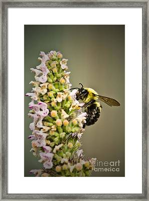 A Bumble Bee Working Framed Print