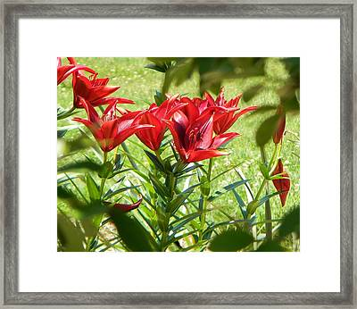 A Burst Of Red Framed Print
