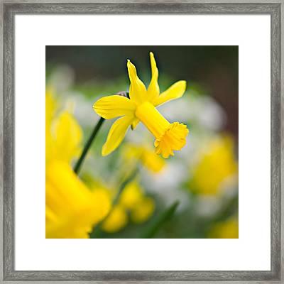A Burst Of Spring Framed Print