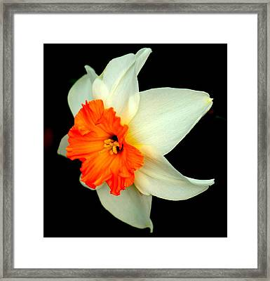 A Burst Of Springtime Glory Framed Print by Rosanne Jordan