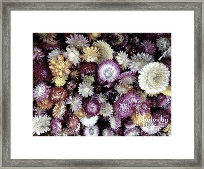 A Bushel Of Autumn Framed Print