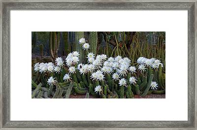 A Cactus Awakening Framed Print by Cindy McDaniel