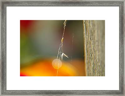 A Captured Dandelion Seed Framed Print by Jeff Swan