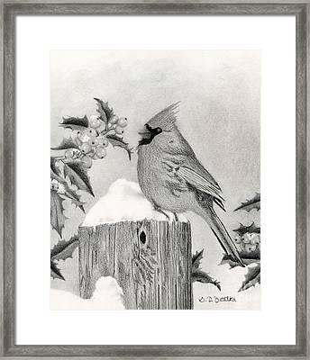 Cardinal And Holly Framed Print by Sarah Batalka