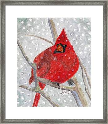 A Cardinal Winter Framed Print