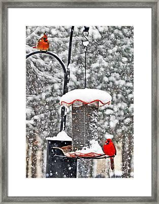 A Cardinal Winter Framed Print by Lydia Holly