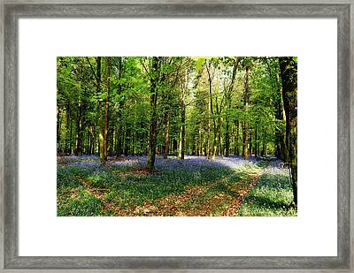 A Carpet Of Colour Framed Print by Wendy Wilton