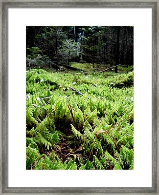 A Carpet Of Moss  Framed Print by Steven Valkenberg