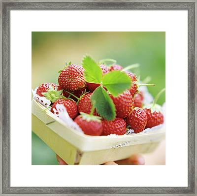 A Carton Of Strawberries Framed Print