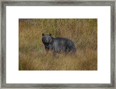 Framed Print featuring the photograph A Casual Glance by Gary Hall