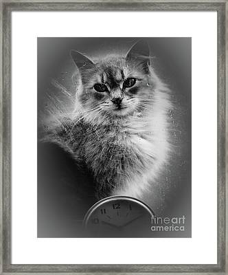 A Cat In The Window Framed Print