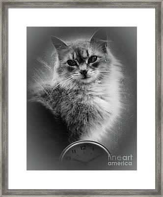 A Cat In The Window Framed Print by Arne Hansen