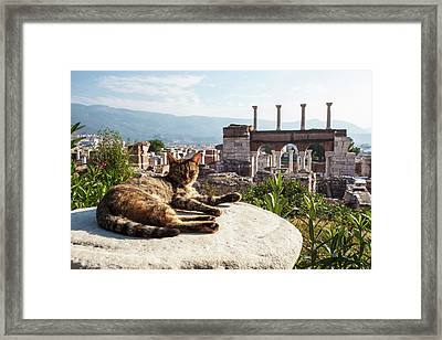 A Cat Lays In The Sun On A Rock Framed Print