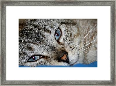 A Cat Named...blue Framed Print