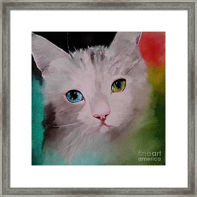 A Cat With Two Diffrent Eyes Framed Print