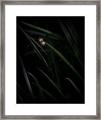 A Caterpillar's World Framed Print
