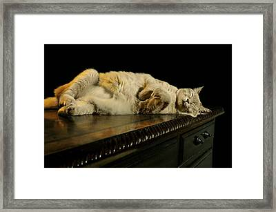 A Cat's Life Framed Print by Diana Angstadt