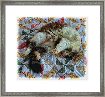 A Cats Life Framed Print