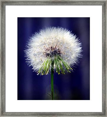 A Childs First Wish Framed Print