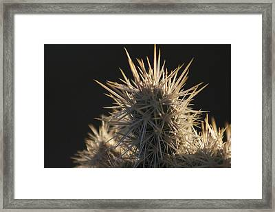 A Cholla Cactus I Framed Print by Carolina Liechtenstein