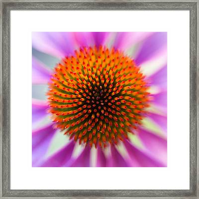 A Circle In A Square Framed Print