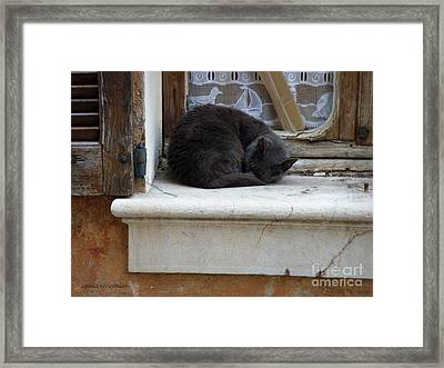 A Circled Up Cat  Framed Print by Lainie Wrightson