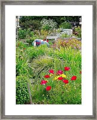 A City Garden Framed Print by David Trotter