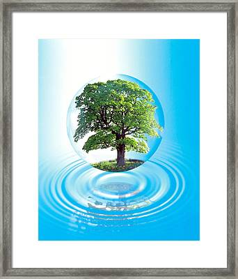A Clear Sphere With A Full Tree Floats Framed Print by Panoramic Images