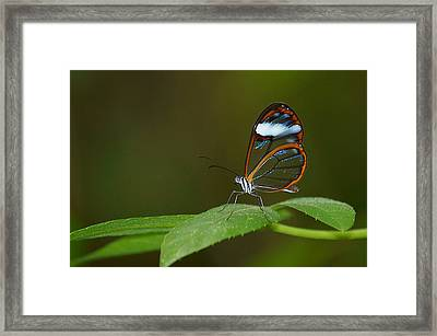 A Clear View Framed Print