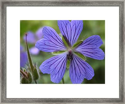 Framed Print featuring the photograph A Close Look 1 by Gene Cyr