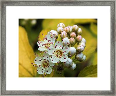 Framed Print featuring the photograph A Close Look 2 by Gene Cyr