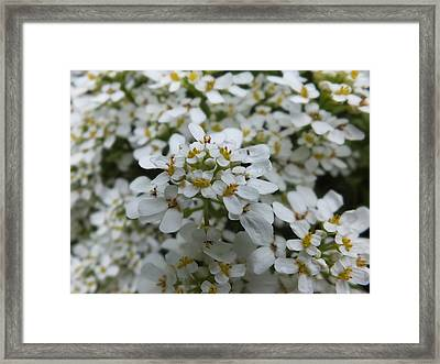 Framed Print featuring the photograph A Close Look 3 by Gene Cyr