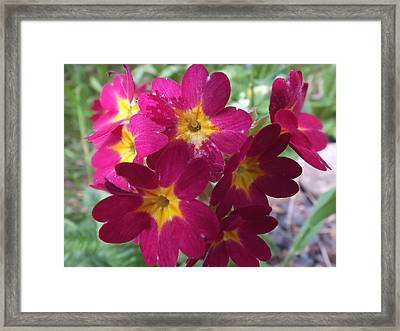 Framed Print featuring the photograph A Close Look 4 by Gene Cyr