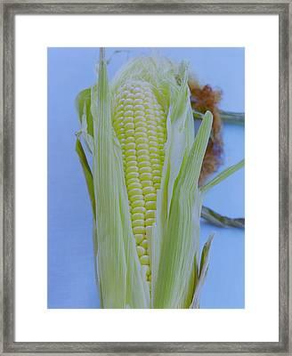 A Cob Of Corn Framed Print by Romulo Yanes
