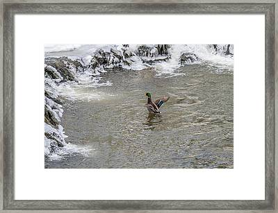 A Cold Bath Framed Print by Stroudwater Falls Photography