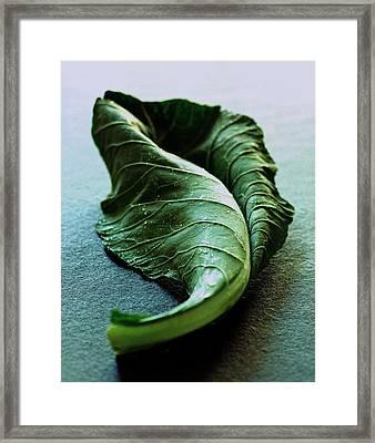 A Collard Leaf Framed Print