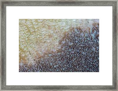 A Colony Of Coral Slowly Dies Framed Print by Ethan Daniels