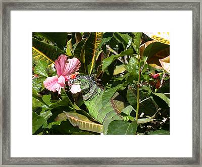 A Colorful Meal Framed Print