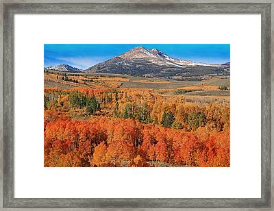 A Colorful Sight Framed Print