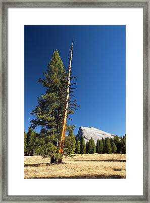 A Colourful Dead Tree Trunk Framed Print