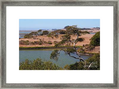 A Cove In Late Summer At Elkhorn Slough Framed Print