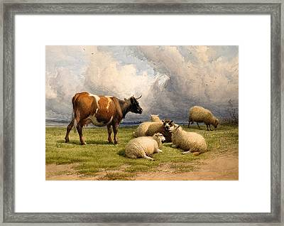 A Cow And Five Sheep Framed Print by Thomas Sidney Cooper