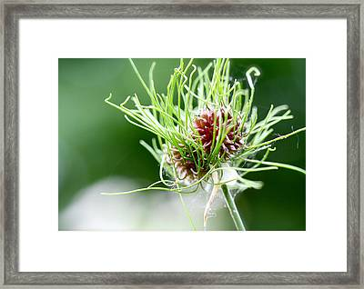A Crazy Notion Framed Print by Tracy Male