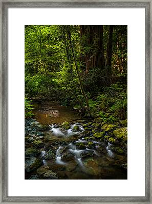 A Creek Among Giants Framed Print