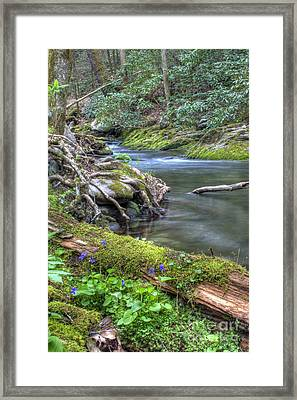 A Creek Side Hike Framed Print