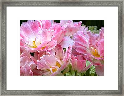 A Crowd Of Tulips Framed Print