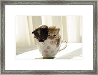 A Cup Of Cuteness Framed Print