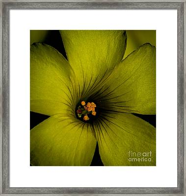 A Cup Of Spring Framed Print by Mitch Shindelbower